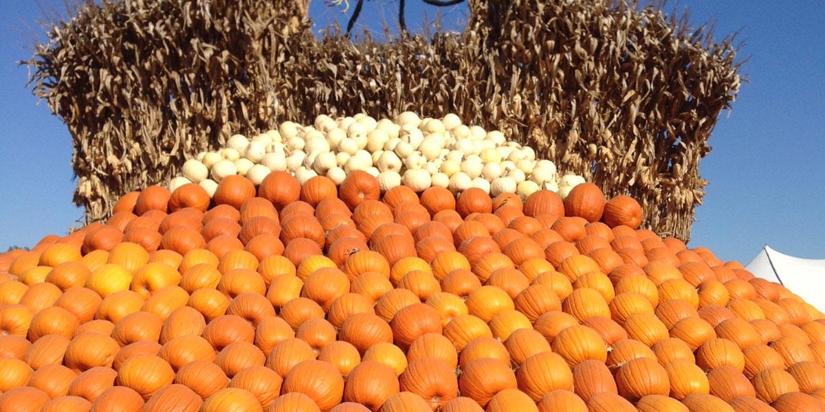10-22-15,Houugh,pumpkin
