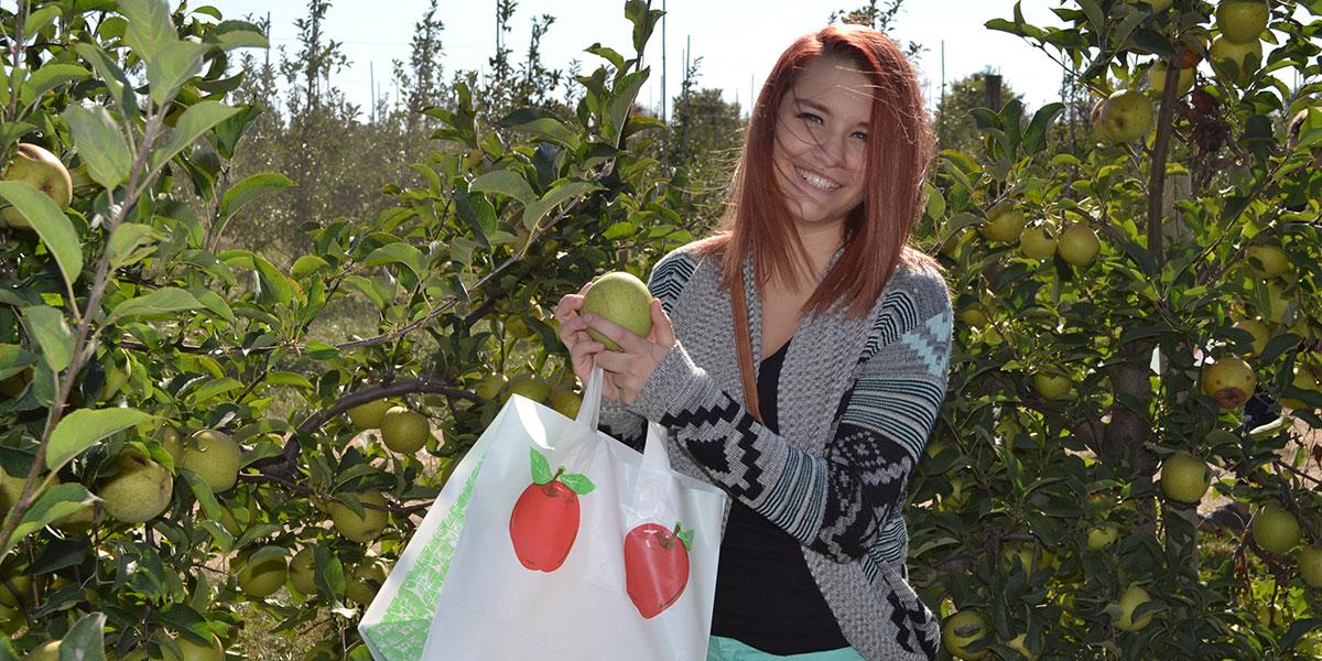 Sophomore-Denise-McAndrew-picks-a-good-apple.